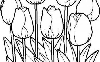 Dibujo Coloridos tulipanes