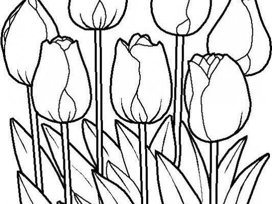 Coloridos Tulipanes Dibujos Para Colorear