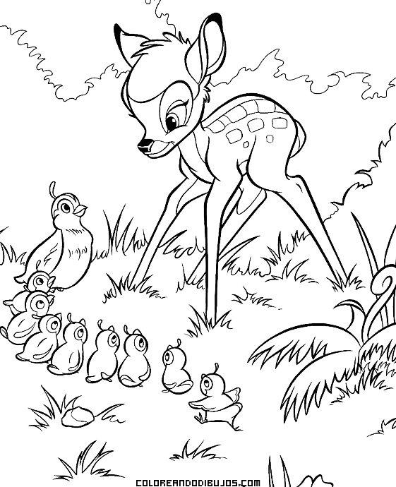 Bambi Y Familia De Pájaros Para Colorear Dibujos Para Colorear