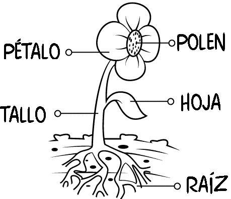 Dibujo Dibujo de las partes de una flor