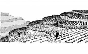 Dibujos De Terrazas De Cultivo Para Colorear Archivos