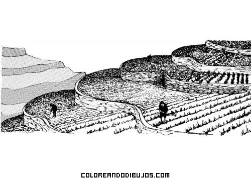 Terrazas De Cultivo Para Colorear Dibujos Para Colorear