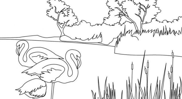 Dibujo Pelícanos en la naturaleza