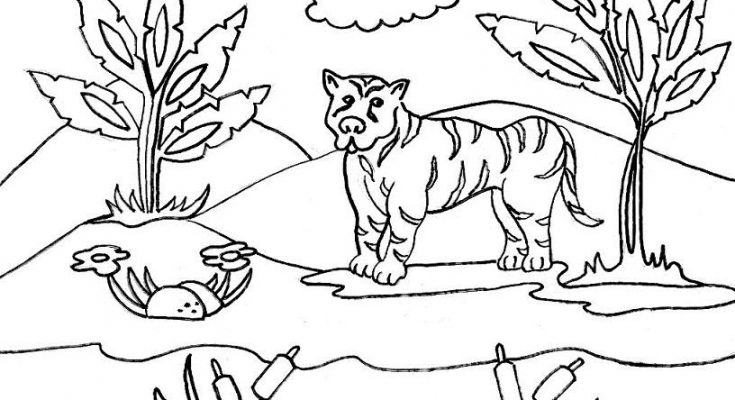 Paisaje De La Selva Para Colorear Dibujos Para Colorear